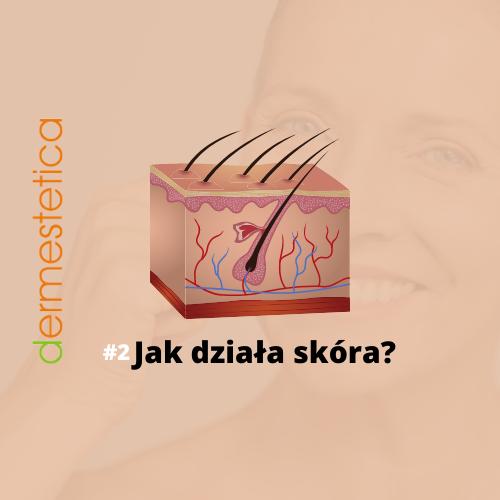 Budowa i funkcja skóry – jak to działa?